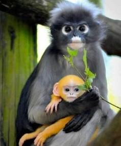 Monkeys - 23 Monkeys - Types 26
