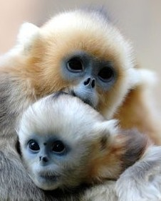 Monkeys - 24 Monkeys - Types 27