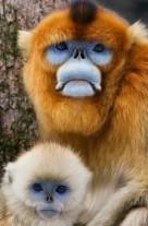 Monkeys - 25 Monkeys - Types 28