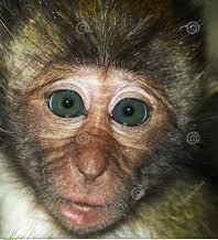 Monkeys - 26 Monkeys - Types 29