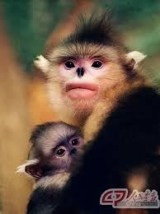 Monkeys - 27 Monkeys - Types 30