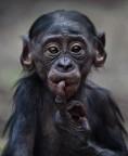 Monkeys - 29 Monkeys - Types 32