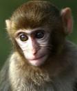 Monkeys - 30 Monkeys - Types 33