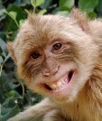 Monkeys - 31 Monkeys - Types 34