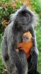 Monkeys - 32 Monkeys - Types 36