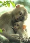 Monkeys - 33 Monkeys - Types 37