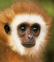 Monkeys - 34 Monkeys - Types 38