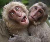 Monkeys - 35 Monkeys - Types 39