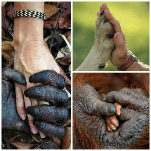 Monkeys - Hands 02