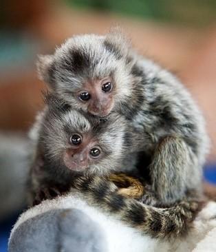 Monkeys - Small 01