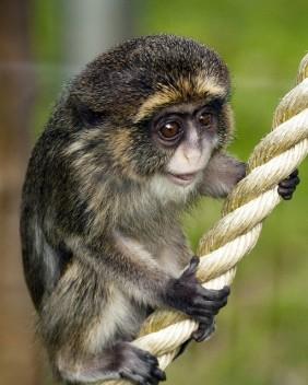 Monkeys - Small 02