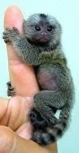 Monkeys - Small 03