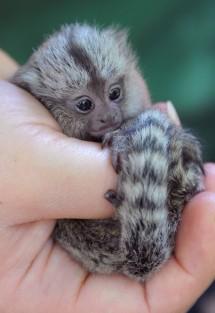 Monkeys - Small 04