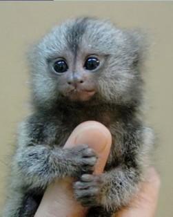 Monkeys - Small 05