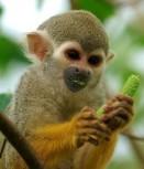 Monkeys - Small 07