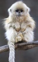 Monkeys - Small 09
