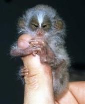 Monkeys - Small 17