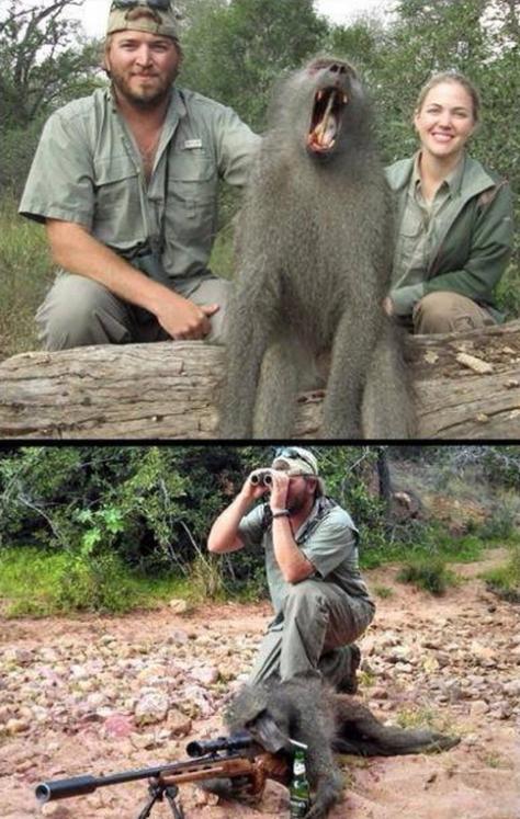 Monkeys - Trophy hunter couple