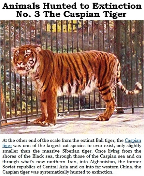 Trophy hunters - Extinction animals hunted to No. 3 Caspian Tiger