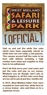 People and companies - Lions white West Midlands Safari Park
