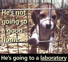 Homeless pets - Abandoned laboratory he's not going to a good home