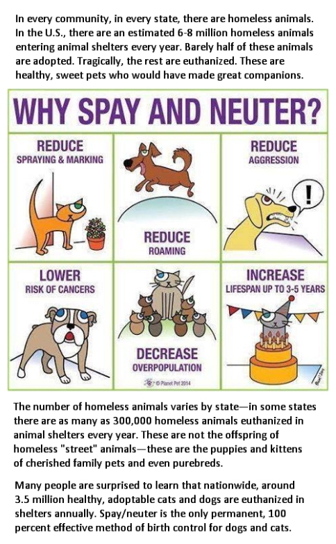Homeless pets - Spay and neuter your pets infog USE
