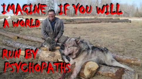 Wolves - Trophy hunted 99_2