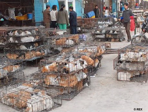 Dog meat trade new 001