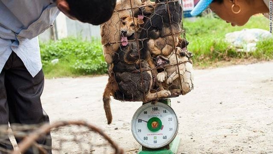 Dog meat trade new 002