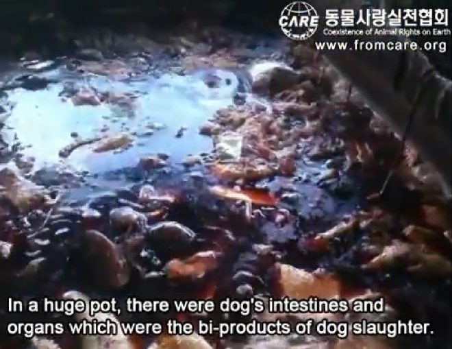 Dog meat trade new 2