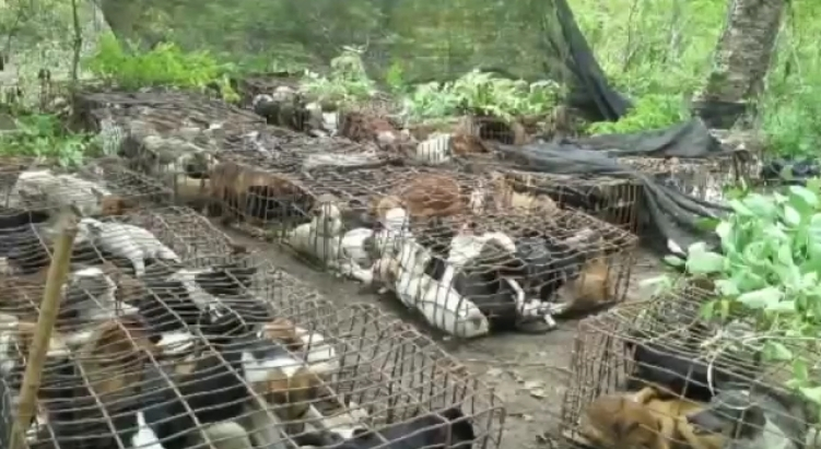 Dog meat trade new 4