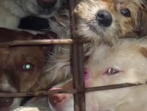 Dog meat trade new 5