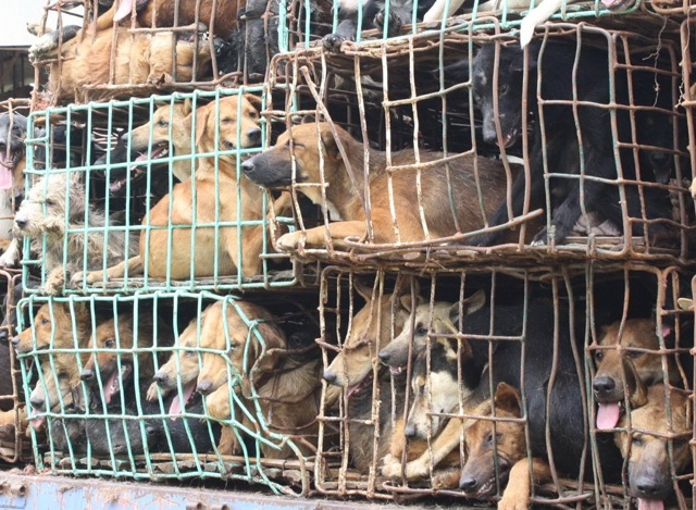 Dog meat trade new 6