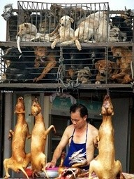 Dogs - Meat and skin trade markets 13