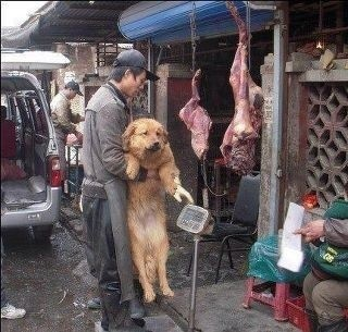 Dogs - Meat and skin trade markets 15