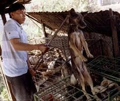 Dogs - Meat and skin trade markets 16