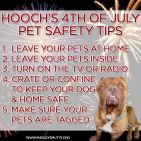 Cats and dogs - Medical safety fireworks 4