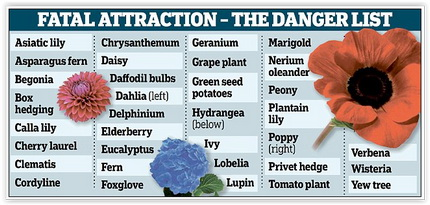 Cats and dogs - Medical toxic plants