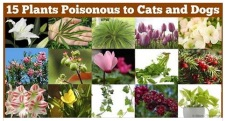 Cats and dogs - Miedical toxic plants