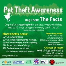 Cats and dogs - Pet theft awareness
