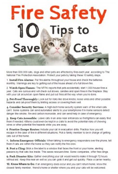 Cats and dogs - Safety fire tips