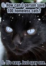 Cats and dogs - Spay and neuter pets black cat pho