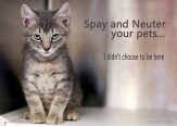 Cats and dogs - Spay and neuter pets cat tabby kit