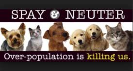 Cats and dogs - Spay and neuter