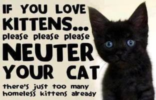 Cats and dogs - TNR cat neuter your cat
