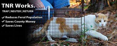 Cats and dogs - TNR works