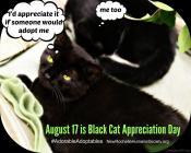 Cats - Black appreciation day Aug 17