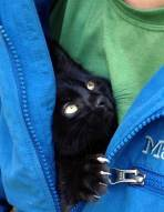 Cats - Black are the most loving