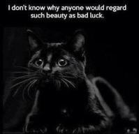 Cats - Black beautiful
