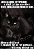 Cats - Black not bad luck